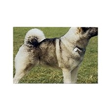 Elkhound Dog Portrait Rectangle Magnet