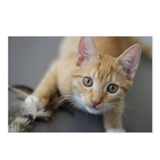 Yellow Tabby Kitten Birth Postcards (Package of 8)