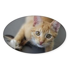 Yellow Tabby Kitten Birthday Decal