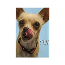 Chihuahua Yum Birthday Card Rectangle Magnet