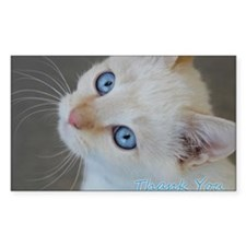Blue Eyed Kitten Thank You Decal