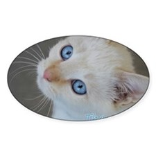 Blue Eyed Kitten Thank You Decal