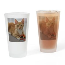 Yellow Tabby Kitten Birthday Drinking Glass