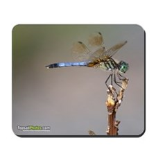 Blue Dragonfly Mousepad