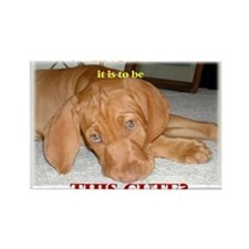 Cute vizsla puppy Magnets