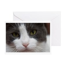 Mooky head shot with watermark Greeting Card