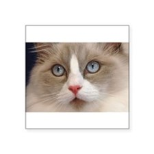 Ragdoll Cats Oval Sticker