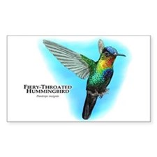 Fiery-Throated Hummingbird Decal