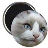 "Cute Ragdoll cat art 2.25"" Magnet (10 pack)"