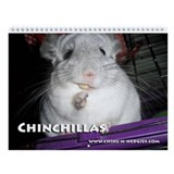 Chinchillas Wall Calendars