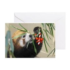 Red Panda Treat Greeting Cards
