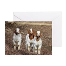 Smiling goats Greeting Card