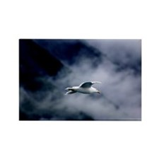 Seagull in the Clouds Rectangle Magnet