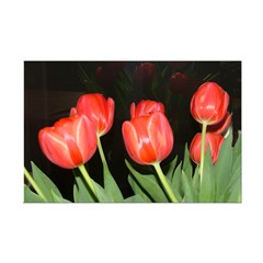 Red Tulips Posters