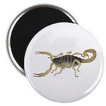 Light Scorpion Magnet