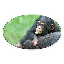 Chimpanzee005 Decal
