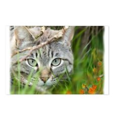 Cute Tabby cat Postcards (Package of 8)