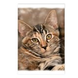 Cute Cat lover Postcards (Package of 8)
