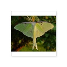 Luna Moth Rectangle Sticker
