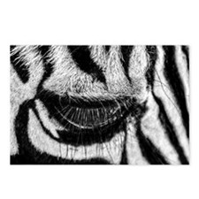 Zebra Eye Postcards (Package of 8)