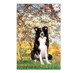 Spring & Border Collie Postcards (Package of 8)