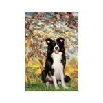 Spring & Border Collie Rectangle Magnet