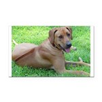 Ridgeback Rectangular Car Magnet