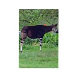 okapi Rectangle Magnet (100 pack)