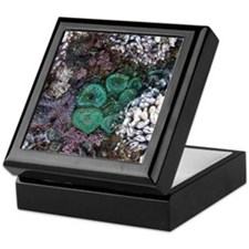 Unique Tide pools Keepsake Box