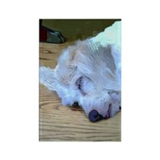 Sleeping Dog Rectangle Magnet