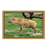 ...Hyena... Postcards (Package of 8)
