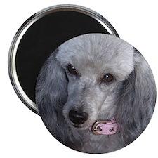Mercedes Silver Poodle Magnet