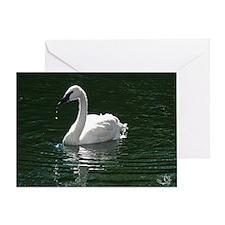 Trumpeter Swan Reflecting Greeting Card