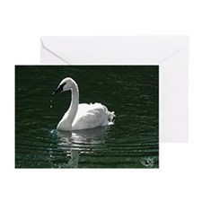 Trumpeter Swan Reflecting Greeting Cards(Pk Of 20)