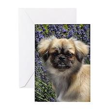 Faithful Tibetan Spaniel Greeting Card