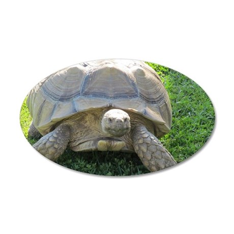 SULCATA TORTOISE 35x21 Oval Wall Decal