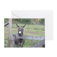 Miniature Donkey II Greeting Card