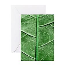 Veined Green Leaf Greeting Card