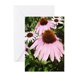 Funny Technicolor Greeting Cards (Pk of 10)