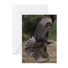 Wing Spread in Flight Greeting Cards