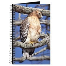 Red Tailed Hawk Journal Journal