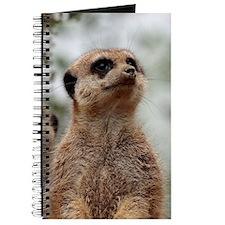 Meerkat062 Journal
