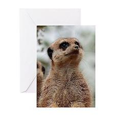 Meerkat062 Greeting Card