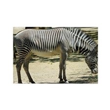 Zebra012 Rectangle Magnet