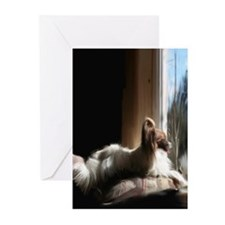 Papillon in Window Greeting Cards (Pk of 10)