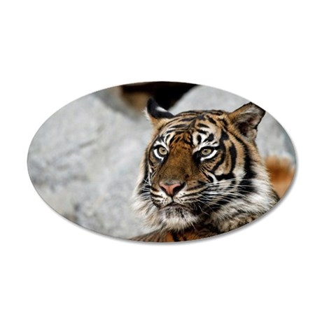 Tiger029 20x12 Oval Wall Decal