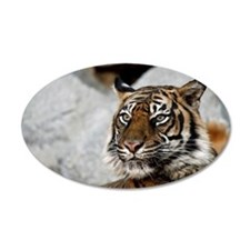 Tiger029 Wall Decal
