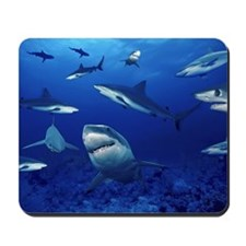Sharks! Mousepad