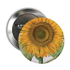 "Vintage Sunflower Basilius Besler 2.25"" Button"