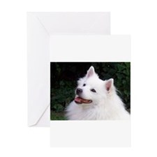 american eskimo Greeting Cards